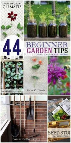 44 Beginner Garden Tips and Ideas   Empressofdirt.net by Marilyn63