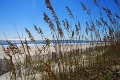 Myrtle Beach State Park, South Carolina...Beautiful beach with a beautiful campground full of huge old oak trees.