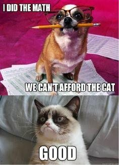 Grumpy Cat vs. dog. Grumpy cat wins. GOOD!!!!!! I did the math.