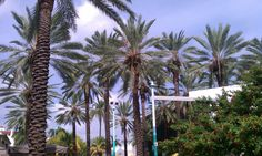 Along Lincoln Road, South Beach, Miami FL http://clubcabeza.blogspot.com/