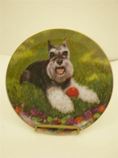 Minature Schnauzer Plate Play Ball by Christopher Nick