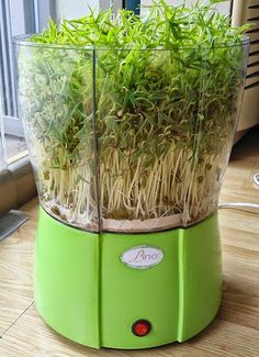 Máy Làm Giá Đỗ: máy trồng rau mầm giá đỗ
