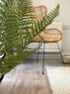 A Handpicked Collection of Unique furniture, natural Home Accessories & Modern Rustic Homewares from scandinavia to the côte d'azur. Newquay, Interior Design Studio, Unique Furniture, Modern Rustic, Cornwall, Plant Leaves, Nature, Plants, Garden