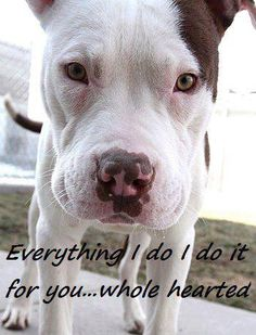 """""""Everything I do, I do it for you....whole hearted!!! #AwesomeDogQuotes"""