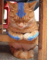 Funny pictures about Avatar cat. Oh, and cool pics about Avatar cat. Also, Avatar cat. Cute Cats, Funny Cats, Funny Animals, Cute Animals, Crazy Cat Lady, Crazy Cats, Animal Gato, Avatar Funny, Avatar The Last Airbender Art