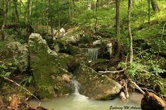 Creek Area - Big Piney Wilderness Area - Via Exploring NW Arkansas