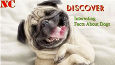 Discover Interesting Facts About Dogs That You Must Startle