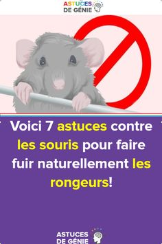 Here are 7 tips against mice to make rodents flee naturally! - À acheter - Projets Diy L Eucalyptus, Rodents, Education, Voici, Memes, Tips, How To Make, Art Tutorial, Rat
