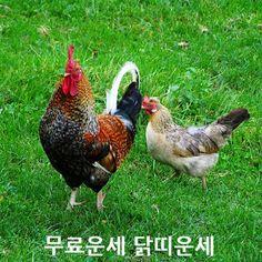 고르디쥬얼리: 무료운세 닭띠운세