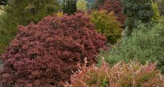 evergreen plants, conifers, foliage plants at Buchholz & Buchholz....and iconic nursery in the Pacific Northwest.