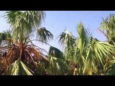 기이한 식물의 세계 E01 - 다큐 - YouTube