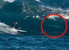 In the hot weather of Australia, big waves are a common thing. Surfers are attracted to these waters but so are the menacing sea creatures below.