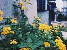 Lihat kebunku penuh dengan bunga