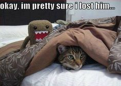 Remember to keep your kitties safe tonight!  Goodnight and peaceful dreams. #CatCentric