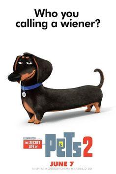 Ver Pelicula Completa De The Secret Life Of Pets 2 Mascotas 2 2019 The Secret Life Of Pe Secret Life Of Pets 2 The Secret Life Of Pets 2 Secret Life Of Pets