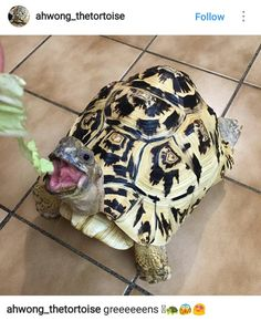 #tortugas #turtles