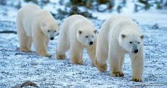 Image result for animals in antarctica