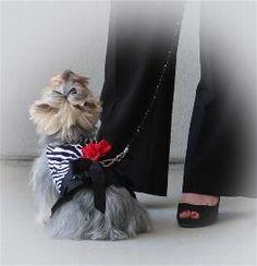 "Classy Doggie Designs Model ""Corrine"""