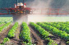 Blog » Nine Ways To Avoid Pesticide Residues In Food