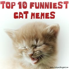 TOP 10 FUNNIEST CAT MEMES 😽 Smile, Care, Share! #catmemes #funniest #cats #animals #pets #memes #funny #sassyclassyme #lol #rofl #top10 Funniest Cat Memes, Funny Cat Memes, Funny Cats, Hilarious, Scottish Fold, British Shorthair, Grumpy Cat, Maine Coon, Animal Memes