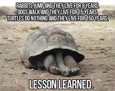 Tortoises, not turtles, but it's still funny!