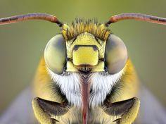 PHOTOS. Fascinants insectes