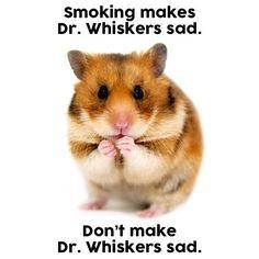 🐹😢 #TheRealCost #smoking #smoke #cigs #cigarettes #cigarette #tobacco #animals #hamster #hamstergram #hamstersofinstagram #🐹