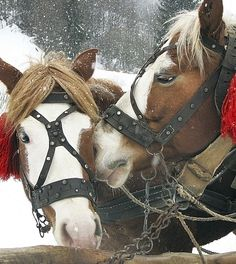 Wouldn't today be a perfect day for a sleigh ride? #CountdownToChristmas