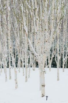 Anglesey Abbey, Cambs, The garden here is magical in winter.