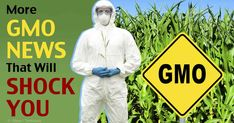 More GMO News That Will Shock You
