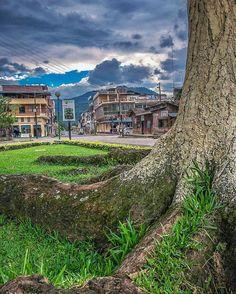 Detrás del árbol. --Behind the tree-- #Sucua #Ecuador #AllYouNeedIsEcuador #iPhone #street by patrickgog