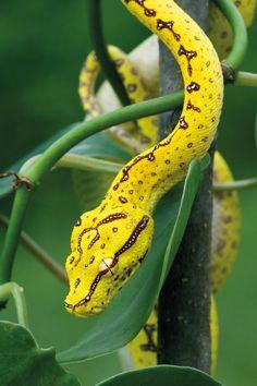 Snake :: [Animal Planet]