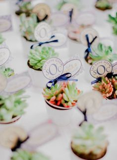 Succulent favors: http://www.stylemepretty.com/2015/03/04/romantic-botanical-garden-wedding/ | Photography: Jordan Brittley - http://jordanbrittley.com/