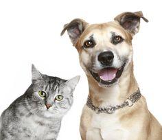 How To Naturally De-Worm and De-Flea Your Cat or Dog