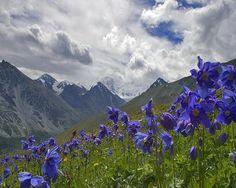 Altai Mountains, Russia (Asia)