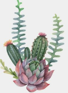 Succulents Drawing, Cactus Drawing, Watercolor Succulents, Cactus Art, Cacti And Succulents, Planting Succulents, Watercolor Flowers, Watercolor Art, Cactus Plants