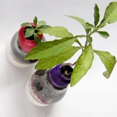 Solouno Mirto - Para los más expertos en el cuidado de plantas