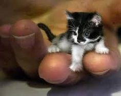I am not a cat person, but this tiny kitten is very, very cute. Although, again, I suspect Photoshopping....