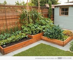 DIY Planter Boxes for Growing Your Own Food