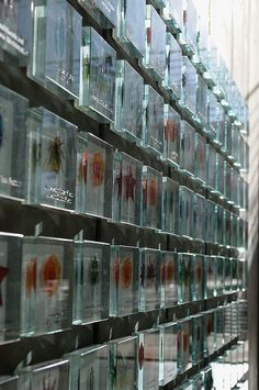 Glass entombed by Hitchster, via Flickr