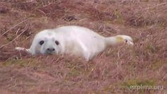 Morning hours are the best time to watch baby seals on our Seal Cam!