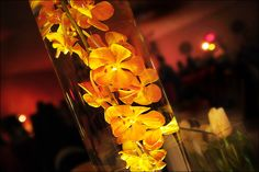 Orange orchids submerged in cylinder vases of water. - Photo by Jason