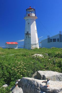 Machias Seal Island Lighthouse Puffins - Maine