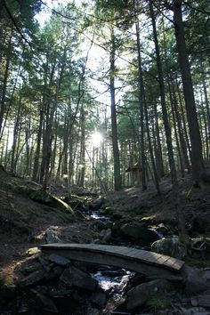 This is a picture taken in the woods of Windhorse Farm in Nova Scotia. I love this place not only for its beauty but also because the family who manage the land, the Dreschers are Shambhala Buddhists who have taken their spiritual journey along with the natural environment that they sustainably farm and forest. A beautiful location in the world, and a beautiful example of spirit in action. - Submitted by Dorian Baroni