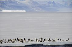 Travel to the Ross Sea and visit one of the most pristine, untouched landscapes on Earth. You'll see a surprising abundance of wildlife. Discover our trips. Antarctica Cruise, Terms And Conditions, Discovery, To Go, Wildlife, Earth, Sea, Mountains, Landscape