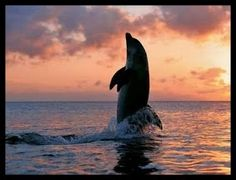 Blacktip shark and Tropical Fish - pag.43  Controlla su http://www.zenoarte.com/stampe-poster-roma/ i formati in cui può essere stampata