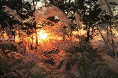 Sunset at Haneul Park