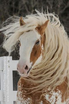 An unruly mane is a good thing