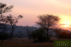 Gorillas in the mist by YEBO Safari