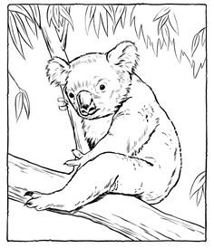 Koala Coloring Pages Images